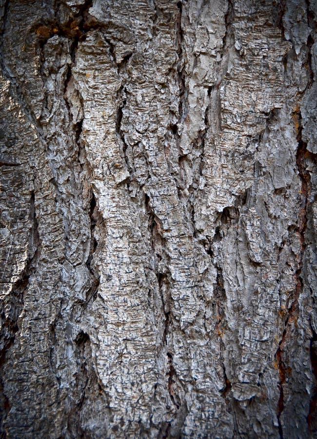 Free Tree Bark Texture Of An Old Pine Tree Stock Photos - 16308763