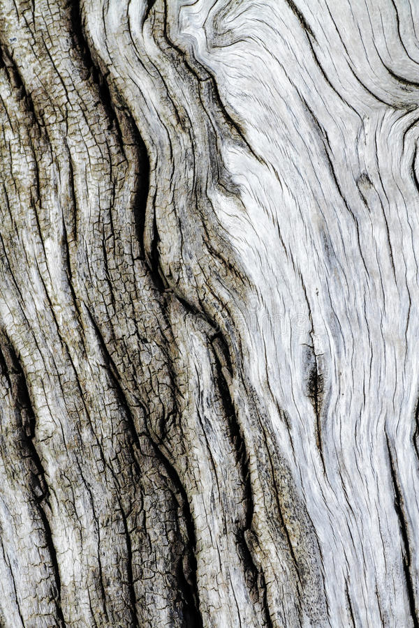 Download Tree bark texture old stock image. Image of antique, cortex - 25833301