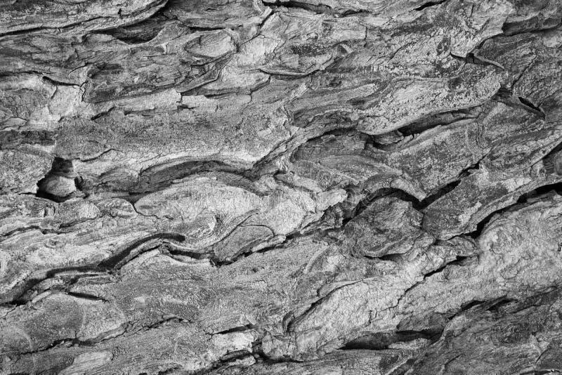Tree bark texture pattern. wood rind stock image