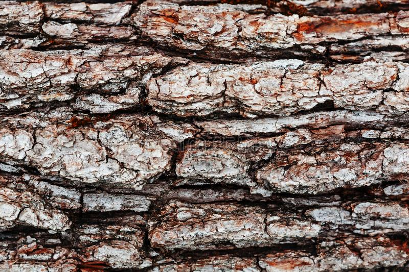 Tree bark texture, pine bark detail, ate. Close-up royalty free stock images