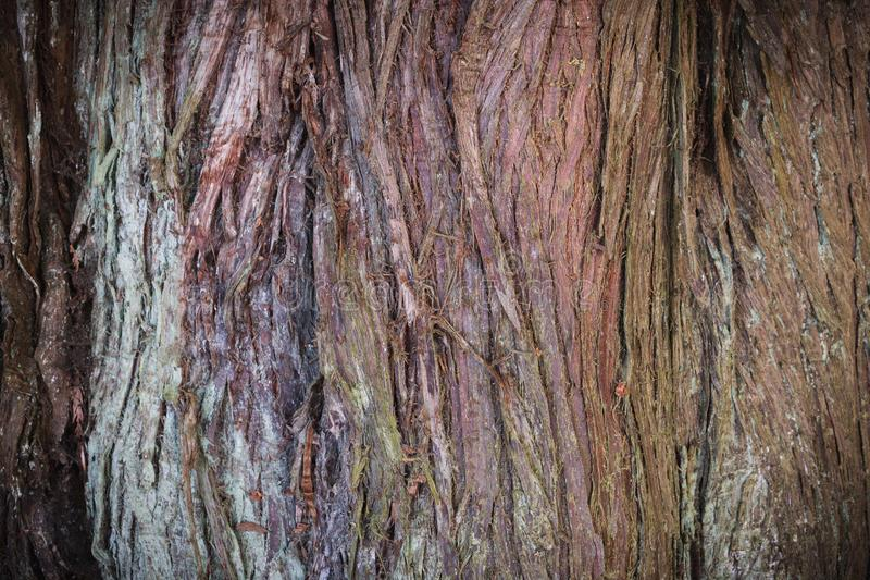 Tree Bark Texture royalty free stock photography