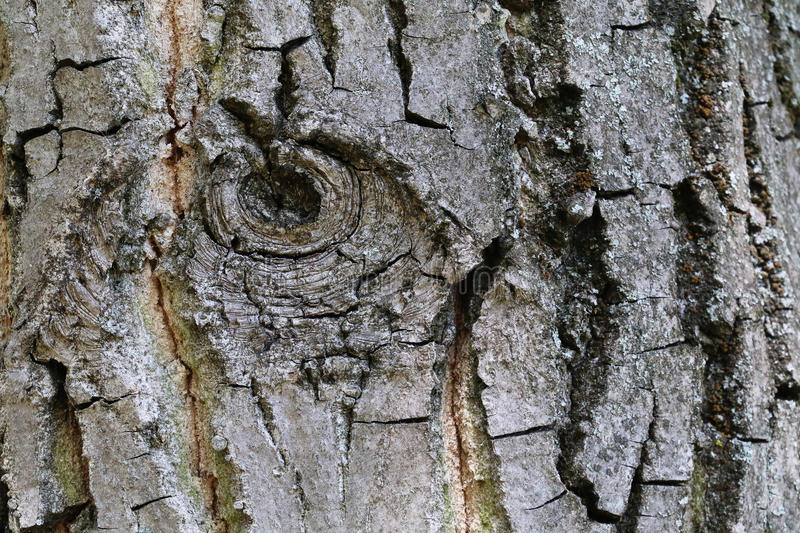 Tree bark texture. Symbolising an eye. Ideal for backgrounds stock photos