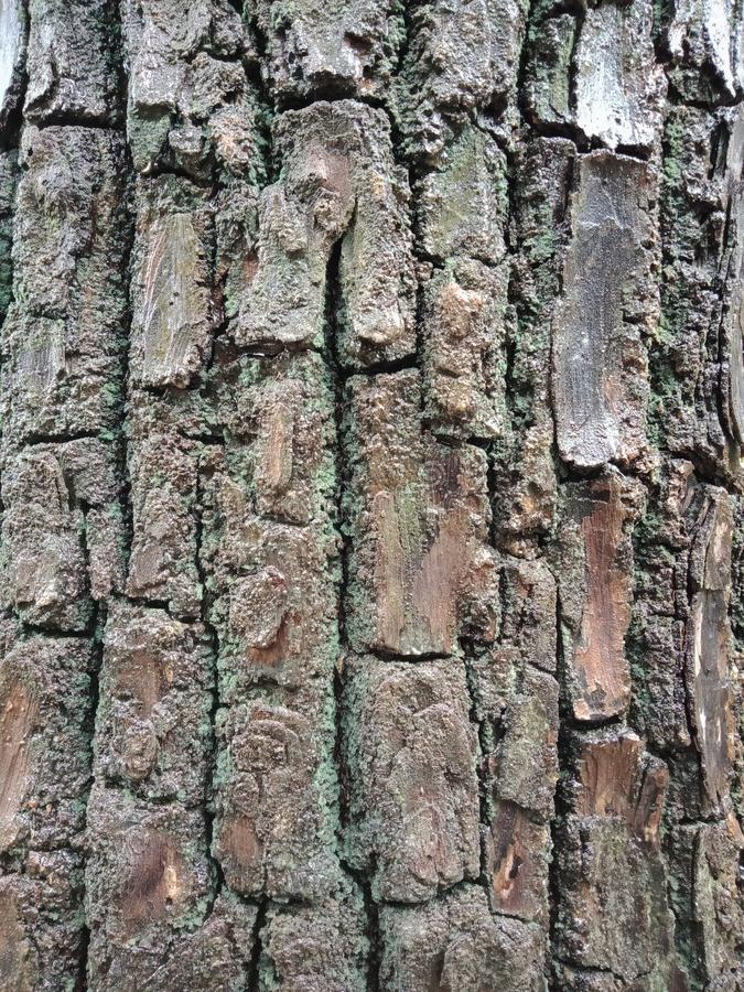 Tree bark texture, textured background wallpaper. royalty free stock photo