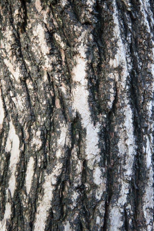 Tree bark texture stock image