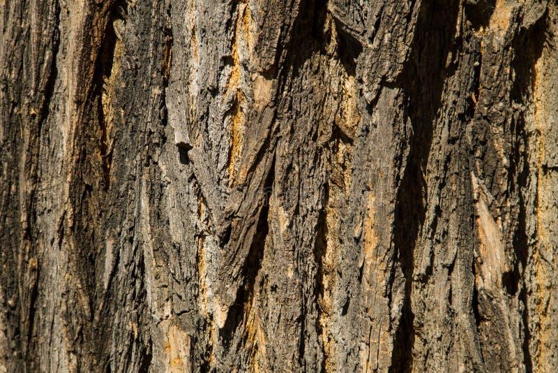 Tree bark texture. Wood background royalty free stock photo