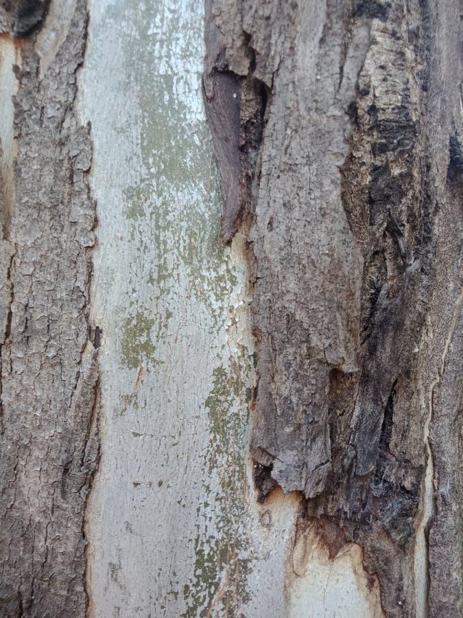Tree bark texture. royalty free stock image