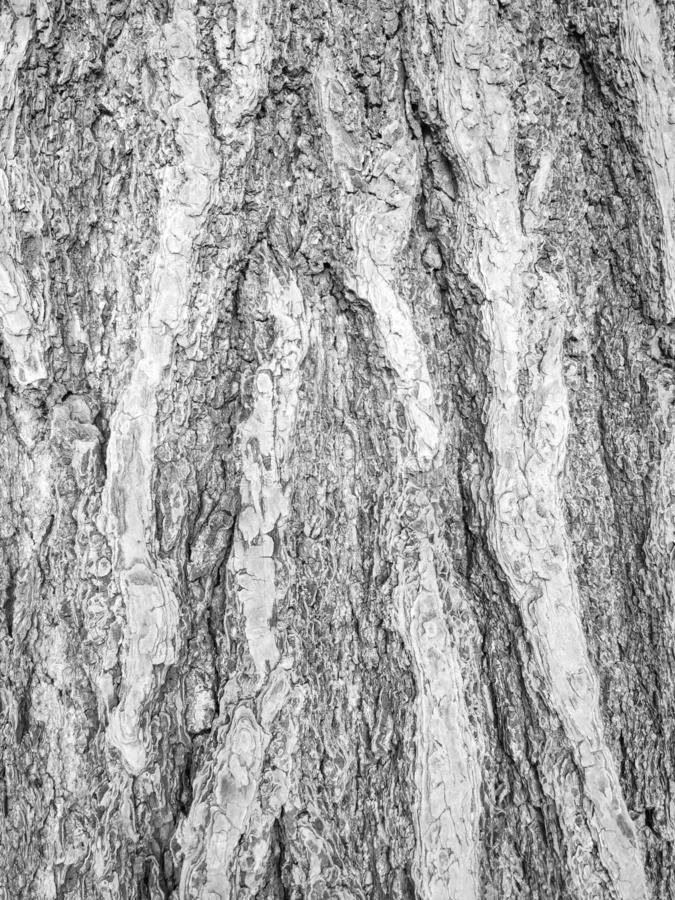 Tree bark textured background and wallpaper. royalty free stock photos