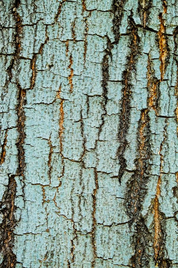 Tree bark wood texture abstract blue background stock photo