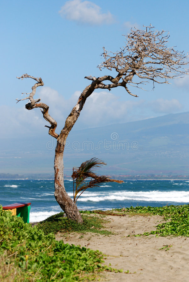 Tree By The Beach Royalty Free Stock Photo