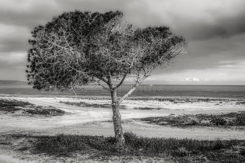 Tree on Beach Against Sky stock photography