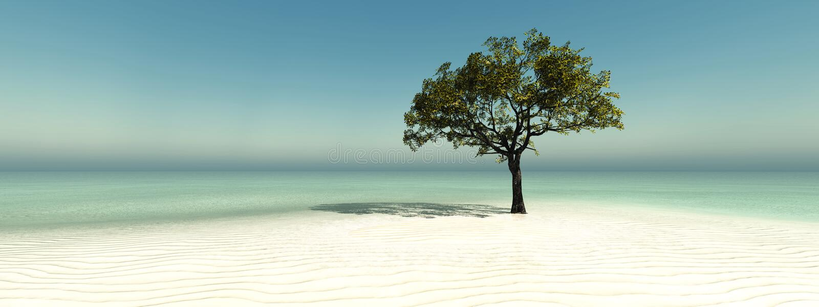 tree on the beach royalty free stock photography