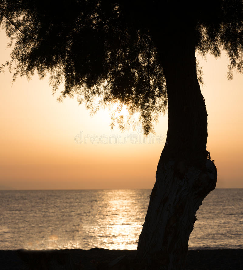 Download Tree stock image. Image of destination, holiday, ocean - 34800105