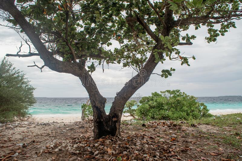 Tree on the beautiful beach near the ocean at the tropical island royalty free stock photography