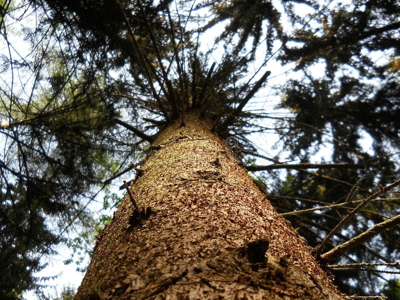 Tree from below royalty free stock image