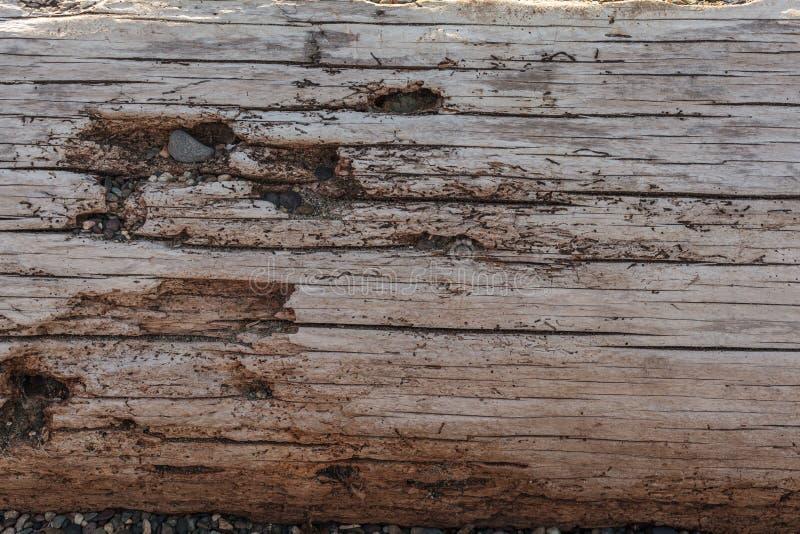 Tree Bench in Washington Park stock photography