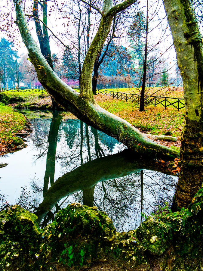 Tree bent over water stock images