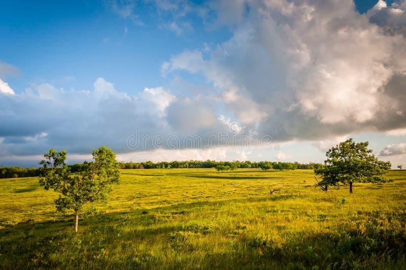 Tree in Big Meadows, in Shenandoah National Park, Virginia. royalty free stock photo