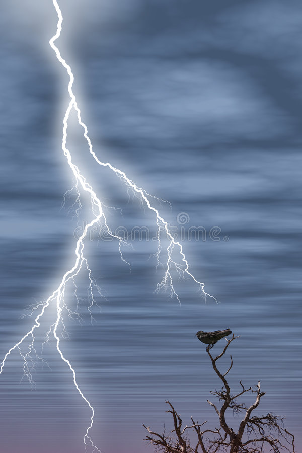 Tree Bird Lightning royalty free stock photos