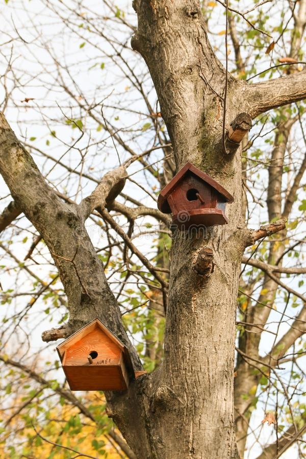 Tree birdhouse in the autumn stock images