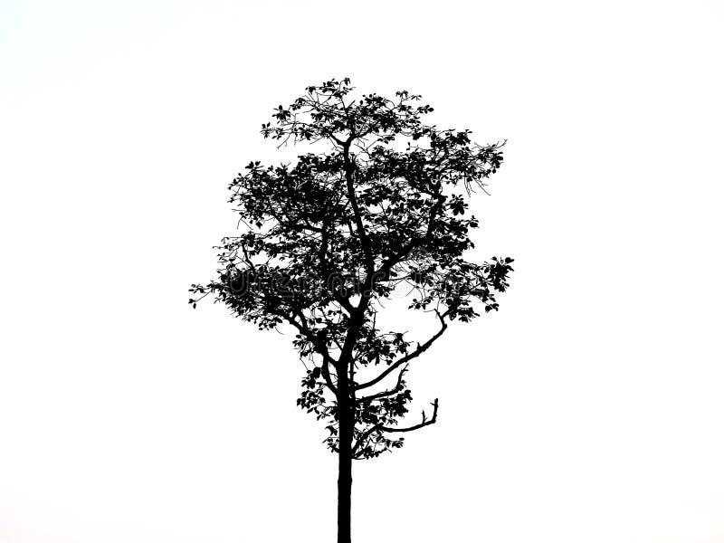 Tree black drawing. royalty free stock photos