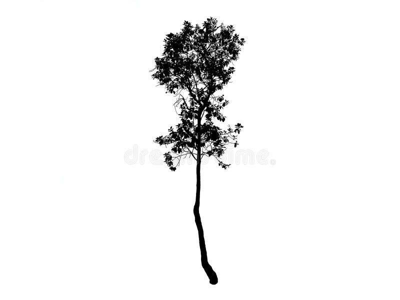 Tree black drawing. royalty free stock photo