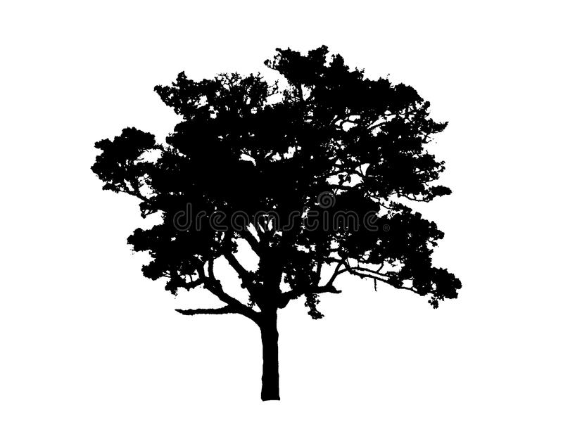Tree black drawing. stock images