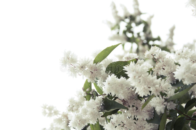 Download Tree Blossom stock image. Image of nature, blossoming - 19836521