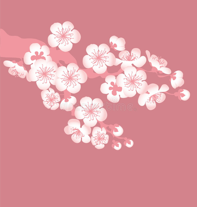 Download Tree blossom stock vector. Image of blooming, cherry - 23445868
