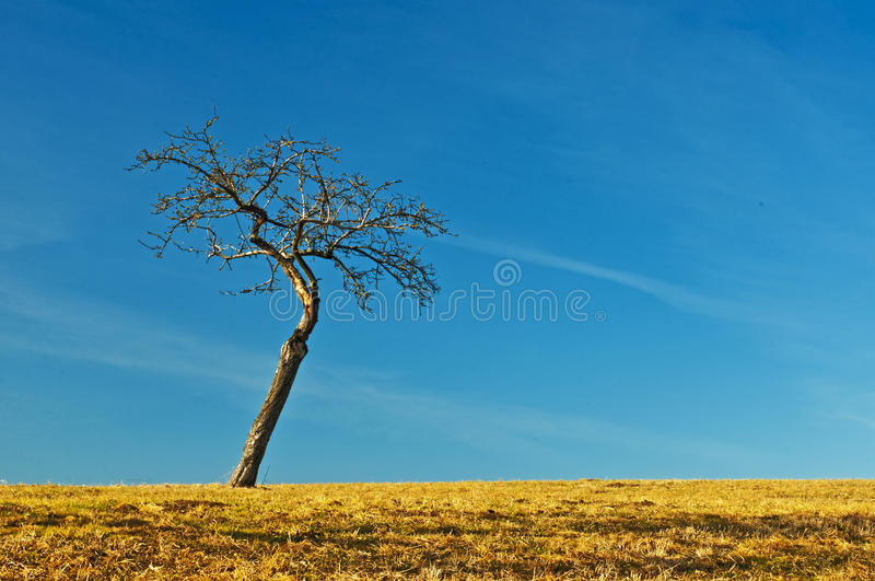 Download Tree with blue sky stock image. Image of background, curved - 23638487