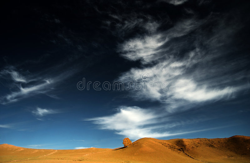 a tree in the blue sky stock image