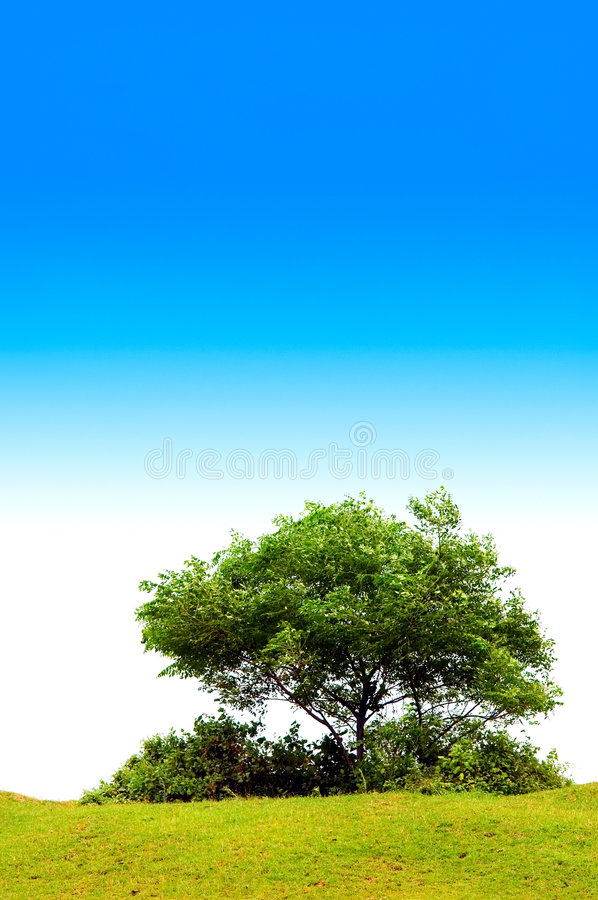 Download Tree with blue sky stock image. Image of leaves, backgrounds - 5937823