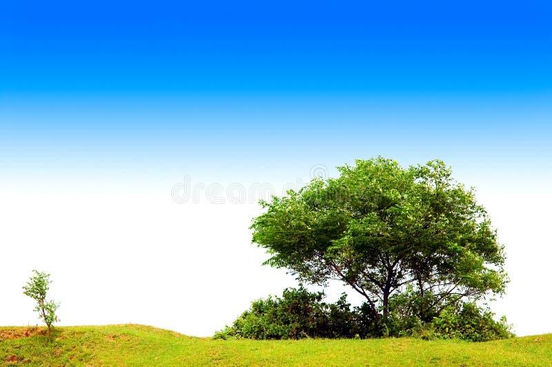 Tree with blue sky stock image