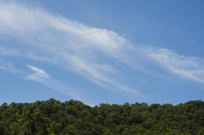 Tree and blue sky background royalty free stock photography