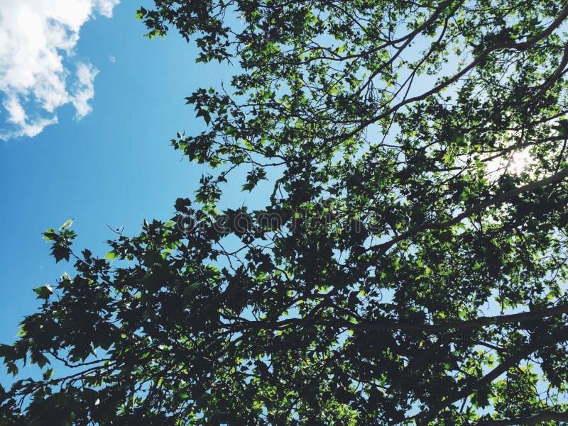 Tree On Blue Sky Background Free Public Domain Cc0 Image