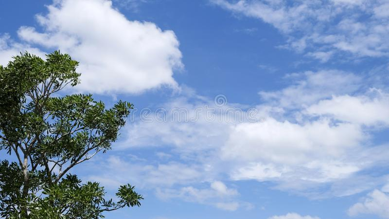 Tree and blue sky with cloud stock photos