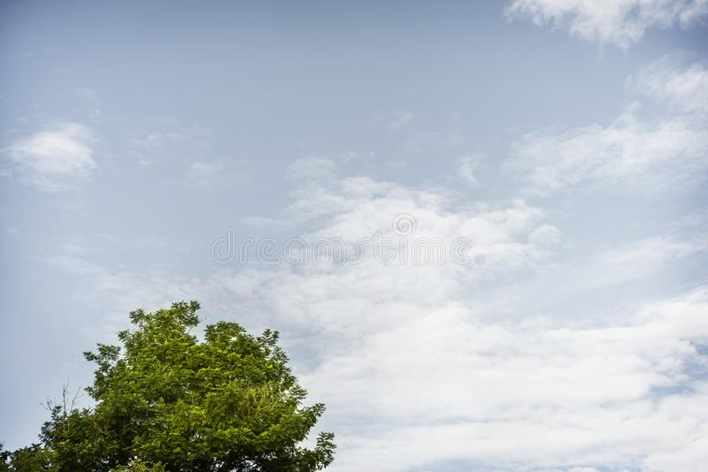 Tree and blue sky color with clouds background royalty free stock images