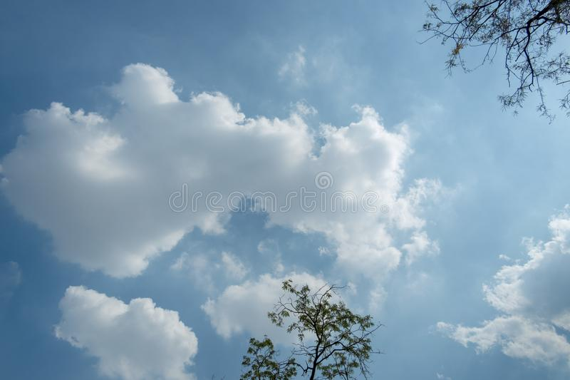 Tree and blue sky color with clouds royalty free stock photography