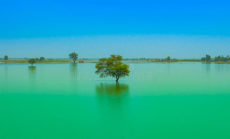 A tree in a blue water lake with blue sky background royalty free stock photography
