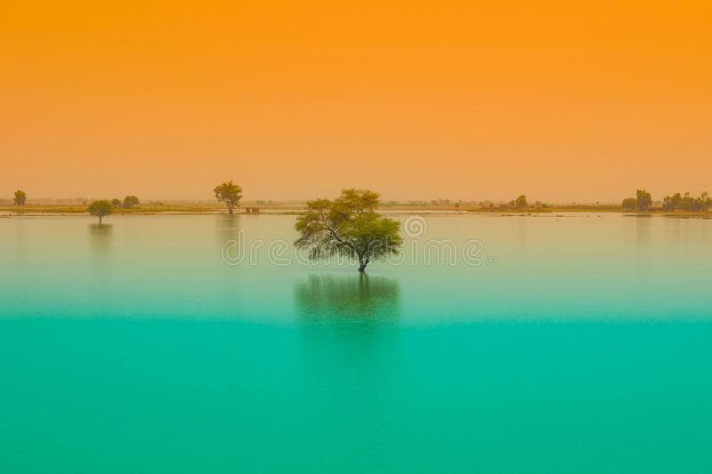 A tree in a blue water lake with sunset background royalty free stock images