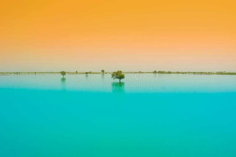 A tree in a blue water lake with sunset background royalty free stock image