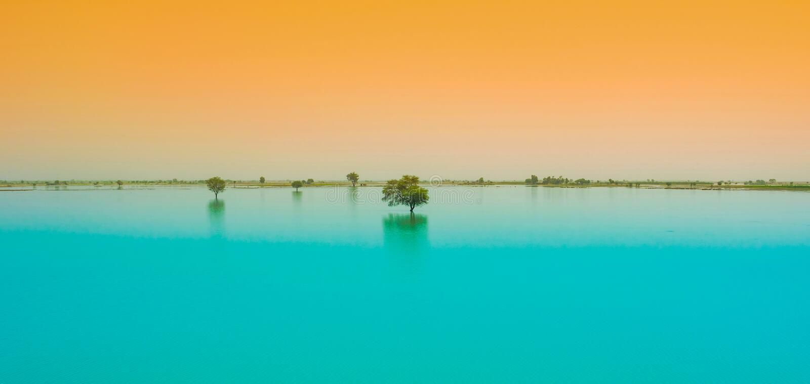 A tree in a blue water lake with sunset background royalty free stock photos