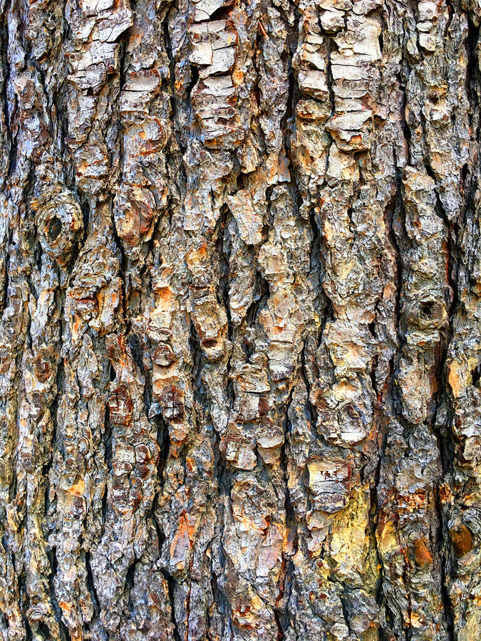 Download Tree Body Background stock photo. Image of color, pine - 90854962