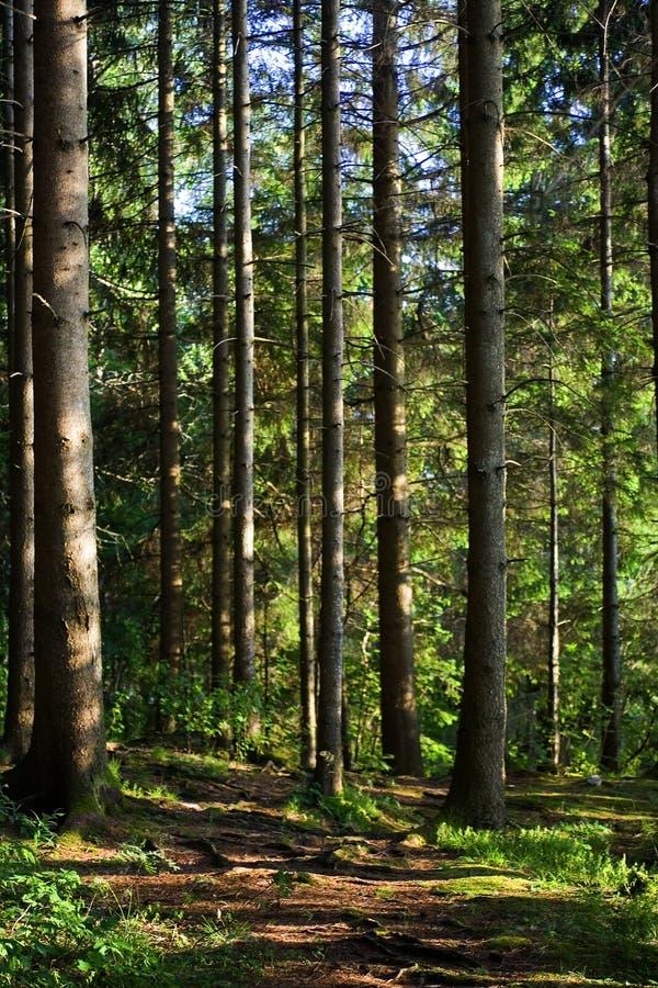 Free Tree Boles Royalty Free Stock Photos - 206388