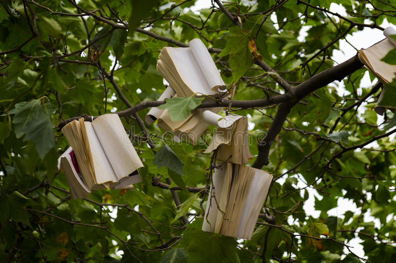 Tree with books stock image