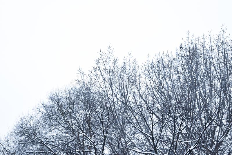 Tree braches covered with snow. Gloomy tree braches covered with snow, shot from Zagreb, Croatia royalty free stock image