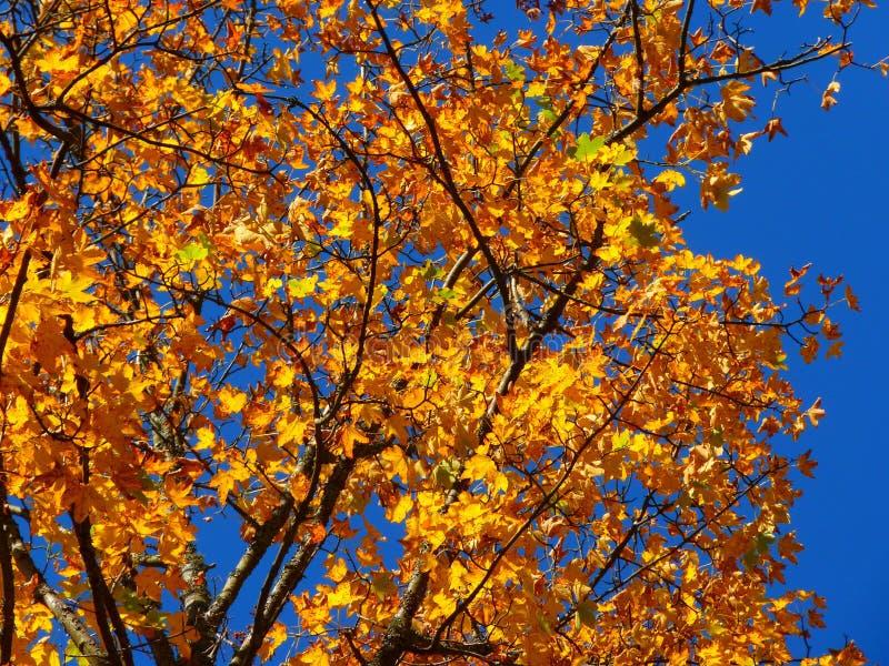 Tree, Branch, Autumn, Yellow stock image