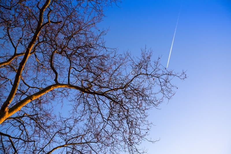 Download Tree Branch On Blue Sky Background. Nature. Stock Illustration - Image: 83715957