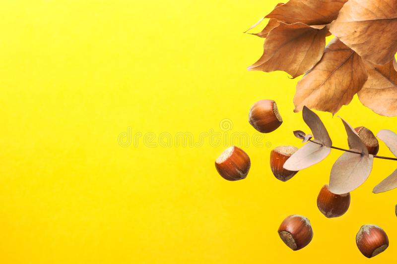 Tree branch with brown dry leaves scattered hazelnuts on bright yellow background. Autumn fall Thanksgiving back to school royalty free stock photo