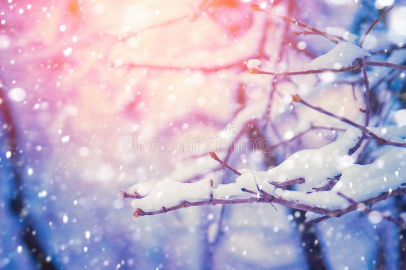 Tree branch covered with snow stock photo