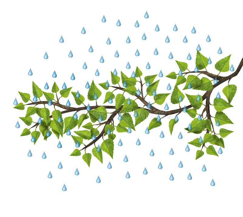 Tree branch with drops of water, a shower of rain in the summer. Illustration isolated on white. stock illustration